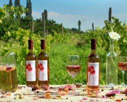 Wine Tour in Armenia
