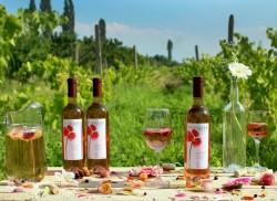 Wine Tour in Armenia